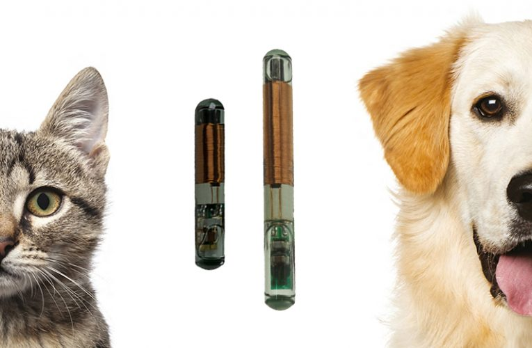 Smartrac Glass Tag Thermosensor for Animal ID Applications